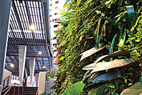 Green walls like this one bring environmental benefits and a sense of fun to a space.